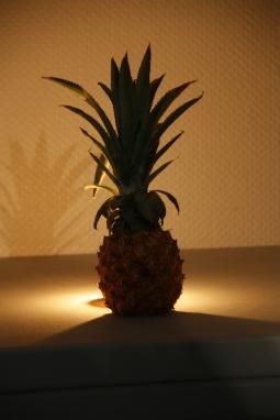 """Atelier """"ananas"""" - Patrice Roux"""