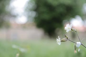 "Atelier ""fleurs"" - Claudie Bastide"