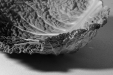"Atelier ""nature morte"" - Ineke Perthuis"
