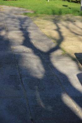 Jeux d'ombres174