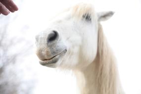 "Atelier ""Portrait de chevaux"" - Caroline Geolle"