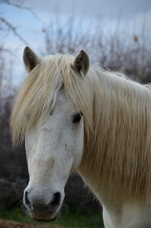"""Atelier """"Portrait de chevaux"""" - Françoise Martin"""