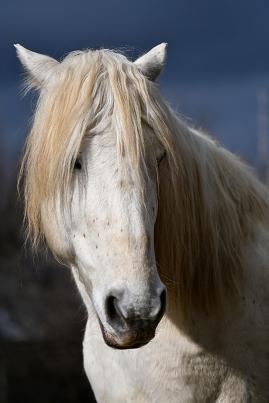 """Atelier """"Portrait de chevaux"""" - Jean Martin"""