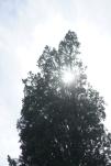 Photographier le même arbre - Richard Gueyda