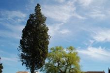Photographier le même arbre - Dominique Henaff