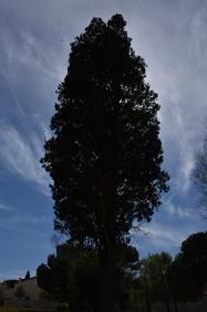 Photographier le même arbre - Jean Luc Wagner
