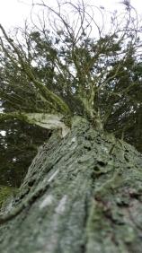 Photographier le même arbre - Marige Teisson