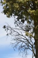 Photographier le même arbre -Françoise Martin