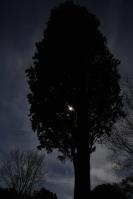 Photographier le même arbre - Patric Roux