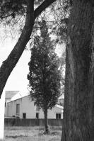 Photographier le même arbre - Frédérique Mondain