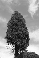 Photographier le même arbre -Ineke Perthuis