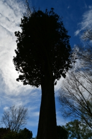 Photographier le même arbre - Jean Martin
