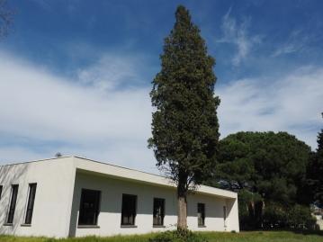 Photographier le même arbre -