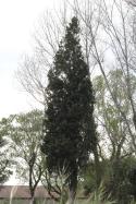 Photographier le même arbre - Eva Pizzo