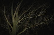 "Atelier mardi ""Flash, nuit, parc"" - Caroline Geolle"
