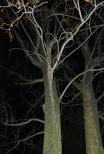 """Atelier mardi """"Flash, nuit, parc"""" - Eva Pizzo"""