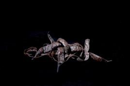 "Atelier lundi ""Nature morte"" - Ineke Perthuis"
